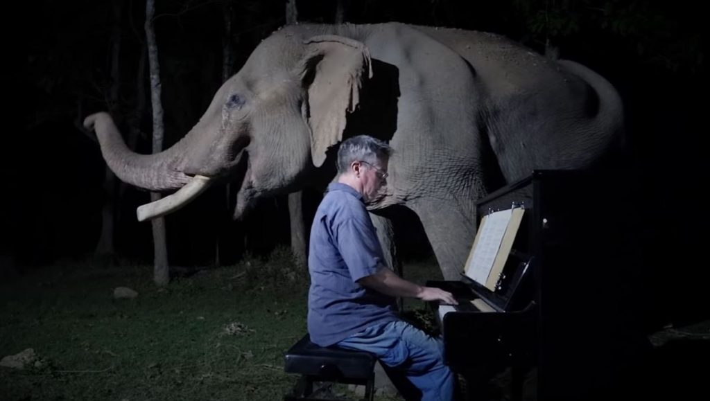 """Man Plays Beethoven's """"Moonlight Sonata"""" for Old Elephant"""